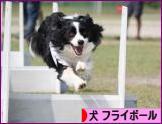 にほんブログ村 犬ブログ フライボール(ドッグスポーツ)へ