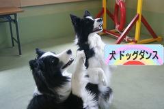にほんブログ村 犬ブログ ドッグダンス(ドッグスポーツ)へ