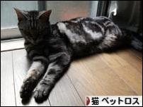にほんブログ村 猫ブログ 猫 思い出・ペットロスへ