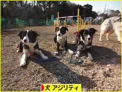 にほんブログ村 犬ブログ ドッグアジリティ(ドッグスポーツ)へ