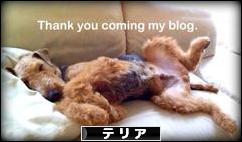 にほんブログ村 犬ブログ テリアへ
