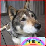 にほんブログ村 犬ブログ 四国犬へ