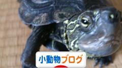 小動物ブログブログランキング参加用リンク一覧