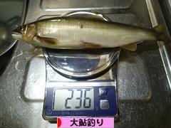 にほんブログ村 釣りブログ 大鮎釣りへ