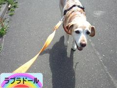 にほんブログ村 犬ブロ グ ラブラドールへ