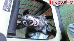にほんブログ村 犬ブログ ドッグスポーツ へ
