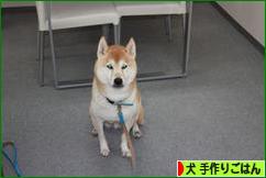 にほんブログ村 犬ブログ 犬 手作りごはんへ