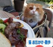 にほんブログ村 猫ブログ 猫 お出かけ・お散歩へ