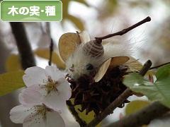 にほんブログ村 花ブログ 木の実・種へ