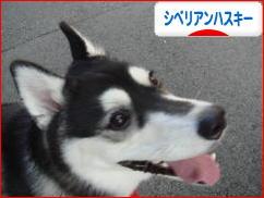 にほんブログ村 犬ブログ </a><br /><a href=