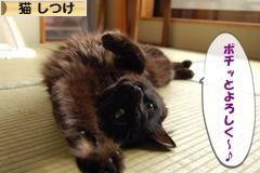 にほんブログ村 猫ブログ 猫 しつけへ