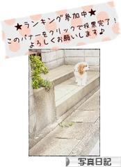 にほんブログ村 写真ブログ 写真日記へ