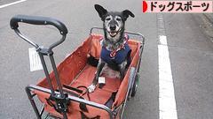 にほんブログ村 犬ブロ グ ドッグスポーツへ