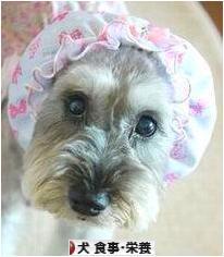 にほんブログ村 犬ブログ 犬 食事栄養へ