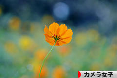 にほんブログ村 写真ブログ カメラ女子(女性初心者)へ
