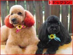 にほんブログ村 犬ブログ ドッグランへ