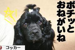 にほんブログ村 犬ブログ コッカーへ