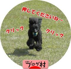 にほんブログ村 犬ブログ アメリカンコッカースパニエルへ