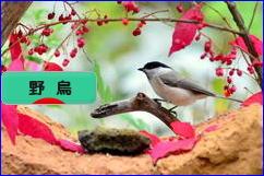 にほんブログ村 鳥ブログ 野鳥へ