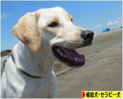 にほんブログ村 犬ブログ 補助犬・セラピー犬へ