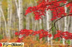 にほんブログ村 写真ブログ デジタル一眼(Nikon)へ