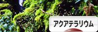 にほんブログ村 観賞魚ブログ アクアテラリウムへ