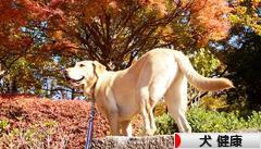 にほんブログ村 犬ブログ 犬 健康へ