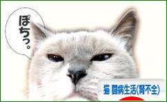 にほんブログ村 猫ブログ 猫 闘病生活(腎不全)へ
