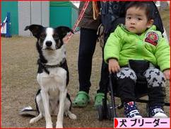 にほんブログ村 犬ブログ 犬 ブリーダーへ