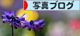 にほんブログ村 写真ブログへ