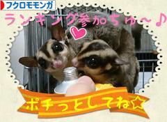 にほんブログ村 小動物ブログ フクロモモンガへ