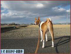 にほんブログ村 犬ブログ 犬 お出かけ・お散歩へ