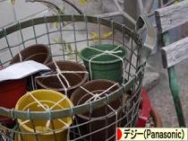 にほんブログ村 写真ブログ デジタル一眼(Panasonic)へ
