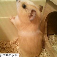にほんブログ村 小動</a><br /><a href=