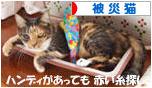 にほんブログ村 猫ブログ 被災猫へ
