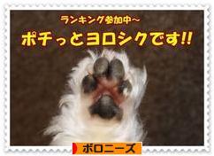 にほんブログ村 犬ブログ ボロニーズへ