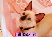 にほんブログ村 猫ブログ 猫 闘病生活へ