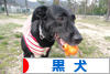 にほんブログ村 犬ブログ 黒犬へ