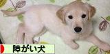 にほんブログ村 犬ブログ 障害犬へ