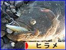 にほんブログ村 釣りブログ ヒラメ釣りへ