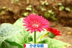 にほんブログ村 花・園芸ブログ 小さな庭へ