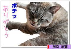 にほんブログ村 猫ブログ MIX洋猫へ