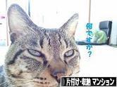 にほんブログ村 その他生活ブログ 片付け・収納(マンション)へ