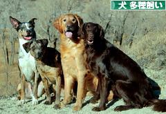 にほんブログ村 犬ブログ 犬 多種飼い(多犬種飼い)へ