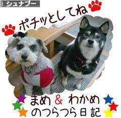 にほんブログ村 犬ブログimg