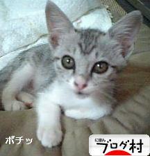 http://www.blogmura.com/img/originalimg/0000057516.jpg