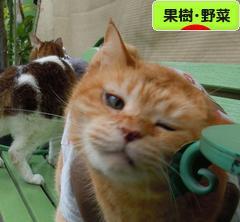 にほんブログ村 花・園芸ブログ 果樹・野菜(家庭菜園)へ