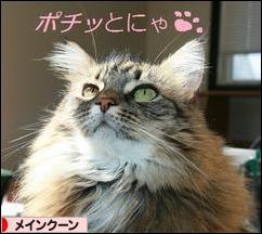 にほんブログ村 猫ブログ メインクーンへ