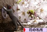 にほんブログ村 花・園芸ブログ 花の名所・植物園へ