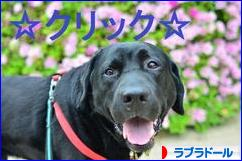 にほんブログ村 犬ブログ ラブラドールへ